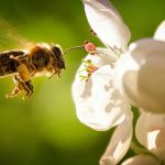 Budi pčela – kratka pravoslavna priča